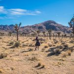 Joshua Tree National Park, The Ultimate Travel Guide